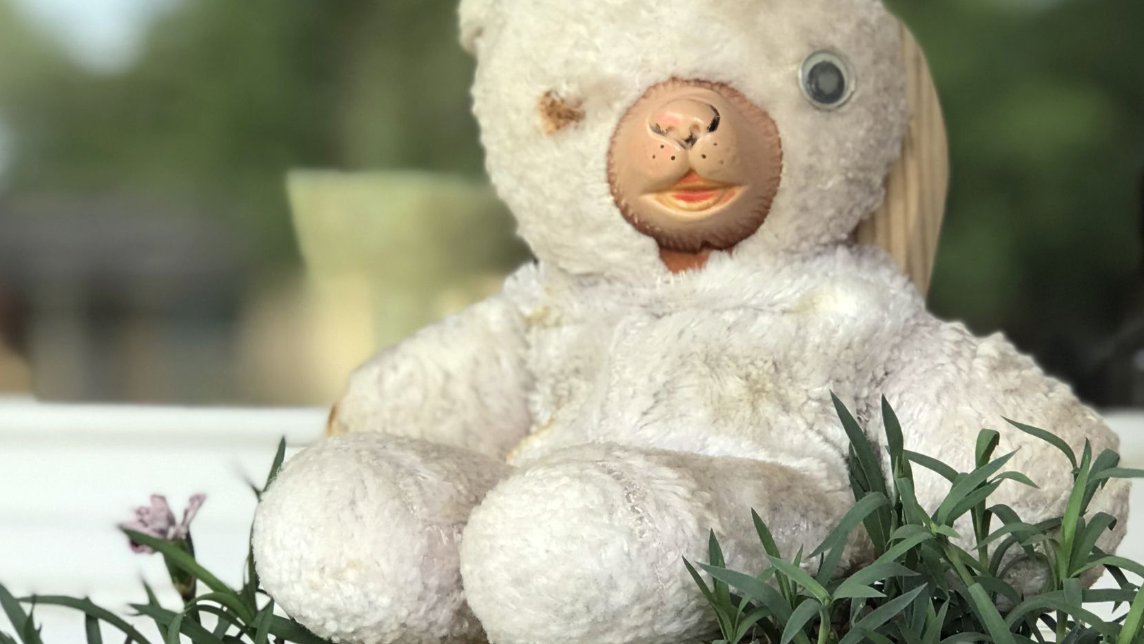 Ron Siebler placed his old teddy bear in front of his house for passing children to spy.