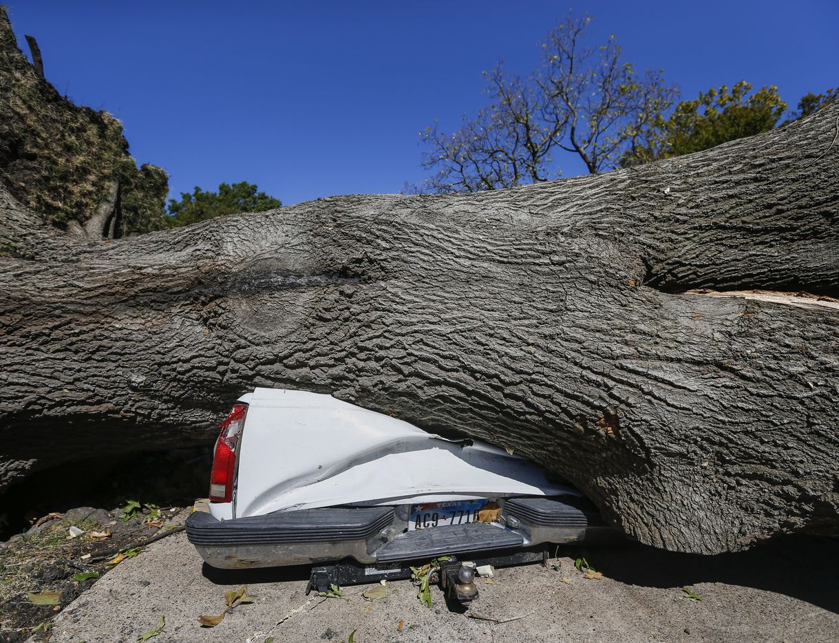 A large tree is seen crumpling a pickup truck at a home on Westway Avenue in Garland, Texas, on Monday, Oct. 21, 2019 after a tornado hit the night before.