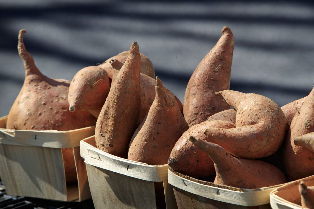 Sweet potatoes, o camotes, con harina y yogurt es la nueva receta para una tarde dulce.