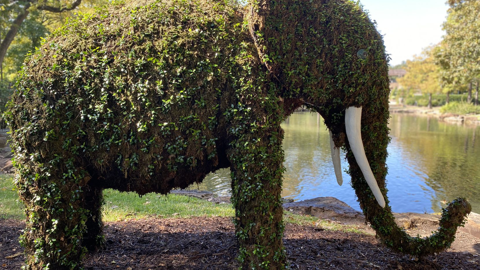 """Fort Worth Botanic Garden's """"Topiaries in the Garden"""" exhibit features 12 plant-based animal shapes, including elephants, giraffes and butterflies."""