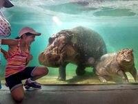 El zoológico de Dallas reabrirá el 29 de mayo con estrictas guías de distanciamiento social y reservaciones en línea.