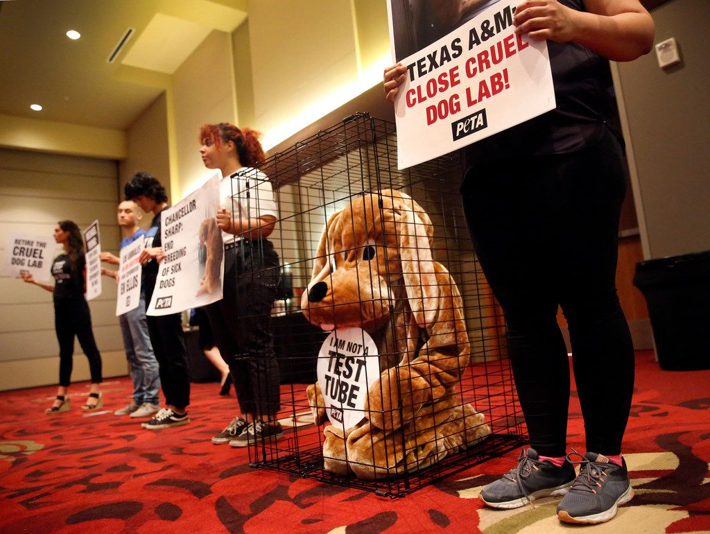 PETA supporters, including Shane Phoenix dressed as a dog in a cage, silently protested from the back of the ballroom during the Texas A&M University's (TAMU) Board of Regents meeting on August 8, 2019.