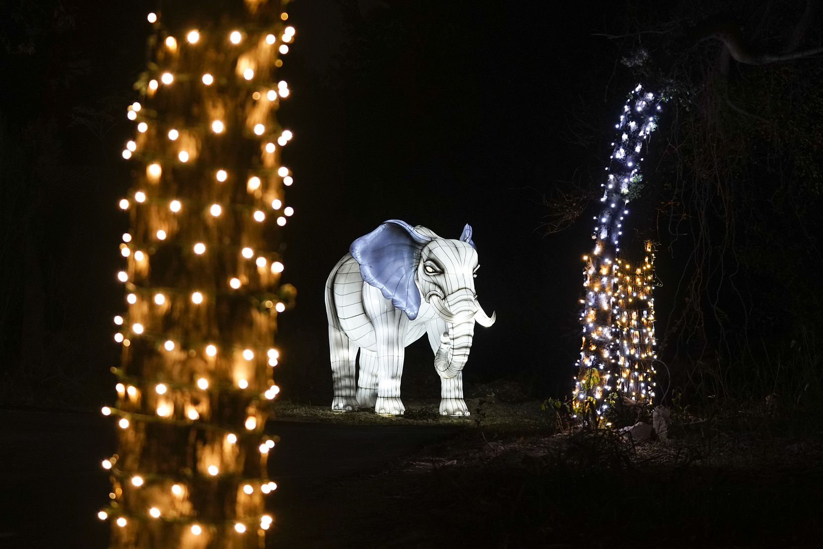 A lantern in the shape of an elephant is seen along the side of the route during Dallas Zoo Lights on Wednesday, Nov. 18, 2020, in Dallas. The Dallas Zoo?s display of one million lights and silk-covered, animal-shaped, lanterns is presented as a drive-through this year.  (Smiley N. Pool/The Dallas Morning News)