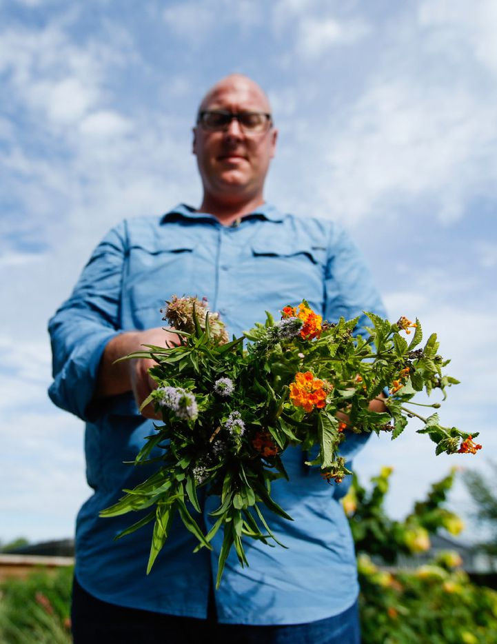 Daniel Cunningham holds a bouquet of plants with mosquito-repelling properties, if the leaves are crushed to extract the oils.