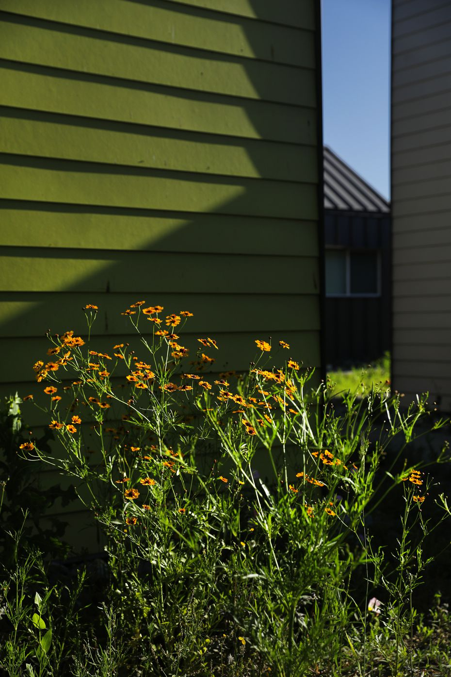 Wildflowers bloom at The Cottages at Hickory Crossing.