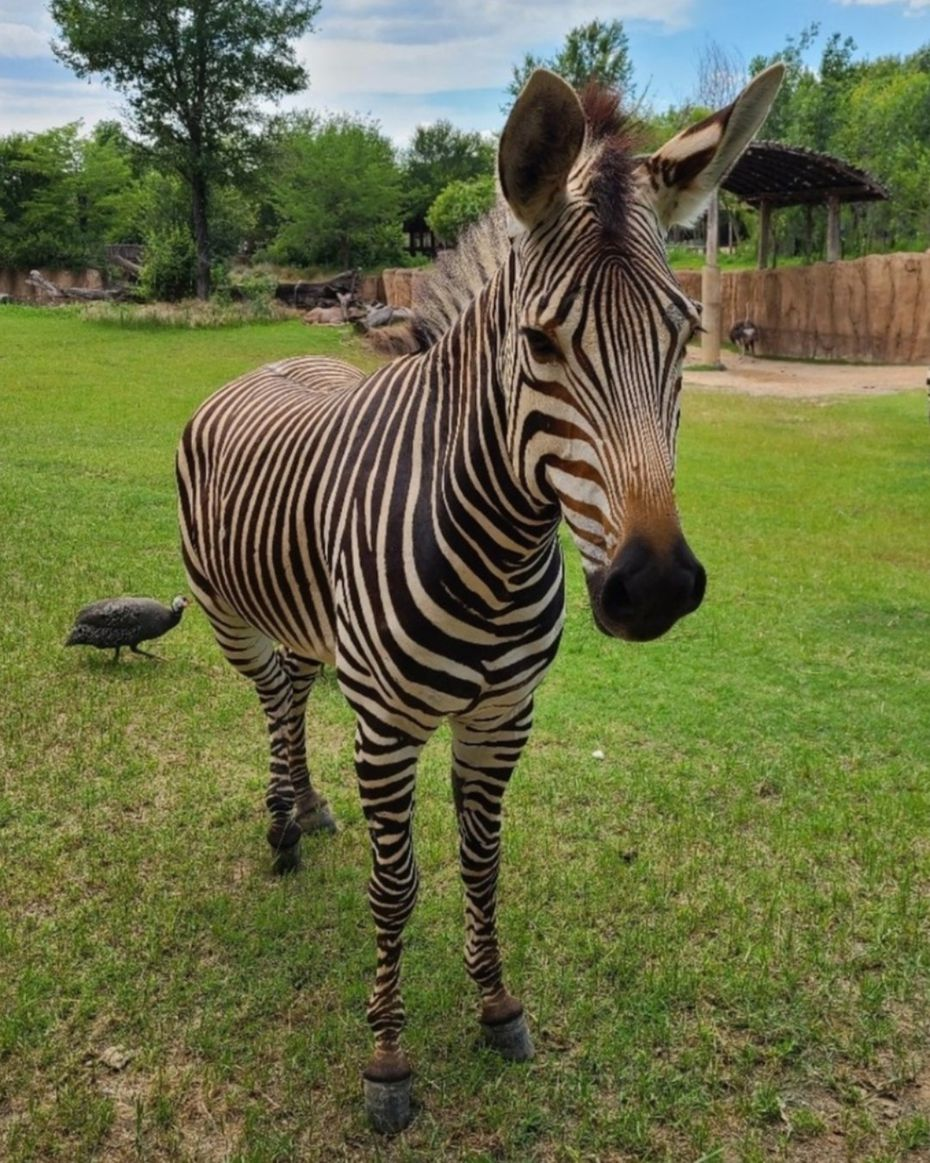 Keeya, 6, had a silly side that was often on display, the zoo said.