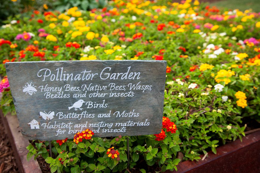 The pollinator garden was planted next to the Kitchen Garden to support bees, butterflies, birds, and bats. Its goal is to promote pollinator health and habitat.
