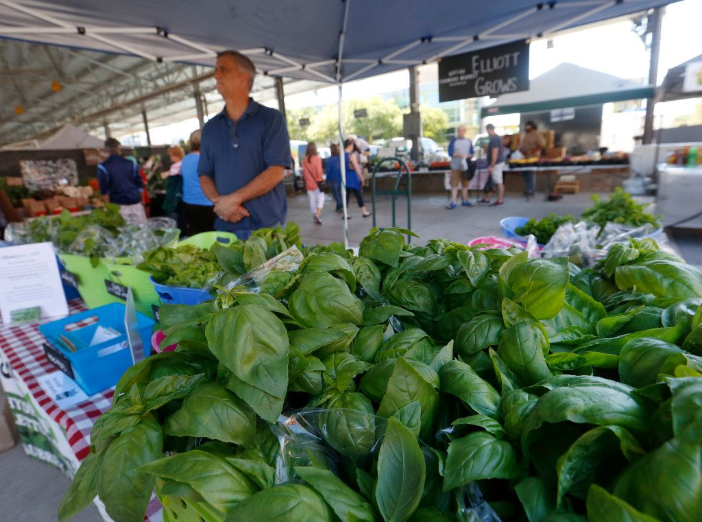 Steve Elliott of Elliott Grows waits for customers early Saturday morning, May 6, in The Shed at the Dallas Farmers Market. In the foreground is Genovese basil, which along with lettuce and greens are grown hydroponically in Aubrey, Texas.