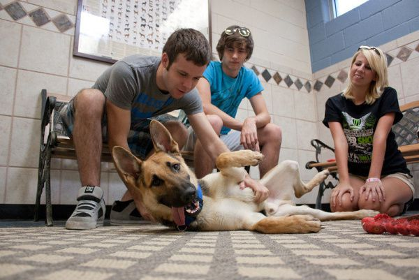 Roy Gardenhire (from left), Trevor Patton and Robin Wooten get to know a German shepherd available for adoption at the Richardson Animal Shelter. Wooten's father, Dennis Wooten, is Richardson's animal services manager, and she often visits the center to help socialize the pets.