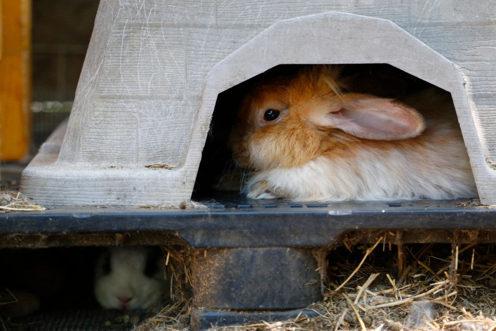 Rabbits take refuge in Dianna Leggett's home until they find an adoptive family or, for the wild ones, find freedom.