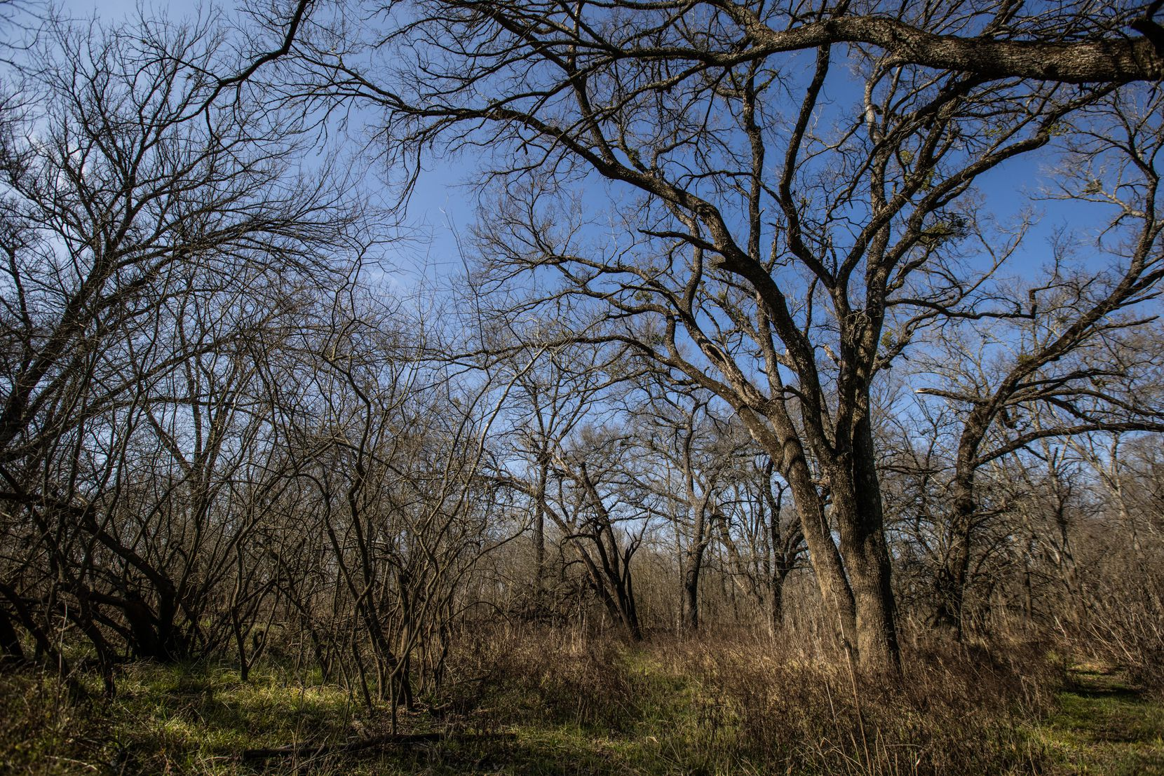 Some areas of the Great Trinity Forest, such as this one, are unchanged from hundreds of years ago when Native Americans first walked the land.
