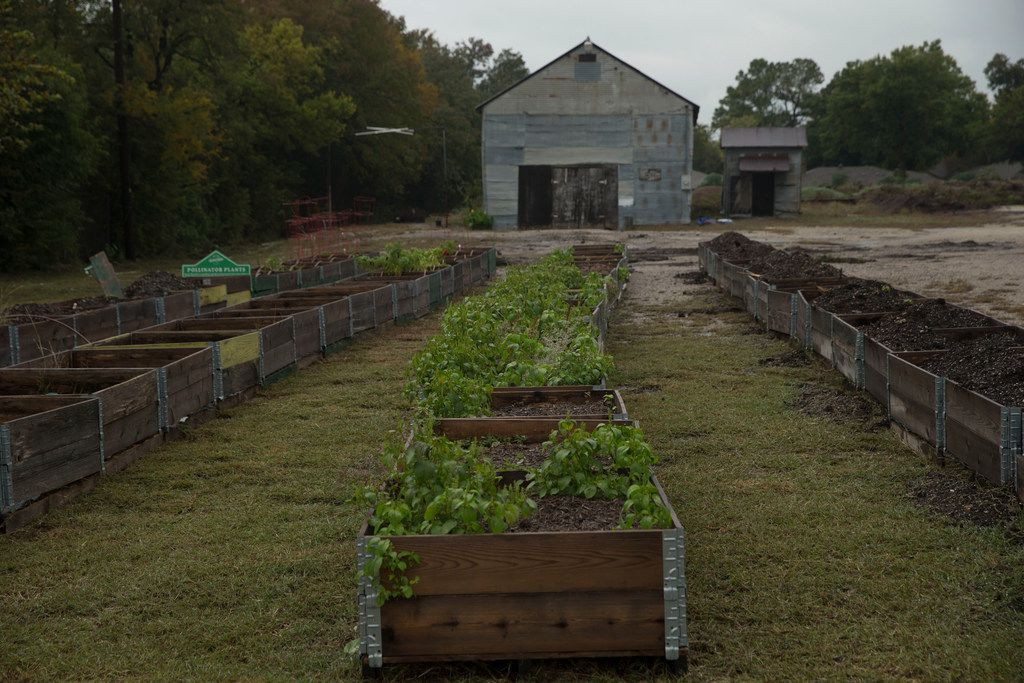 More than 80 raised beds will be used for vegetable research.
