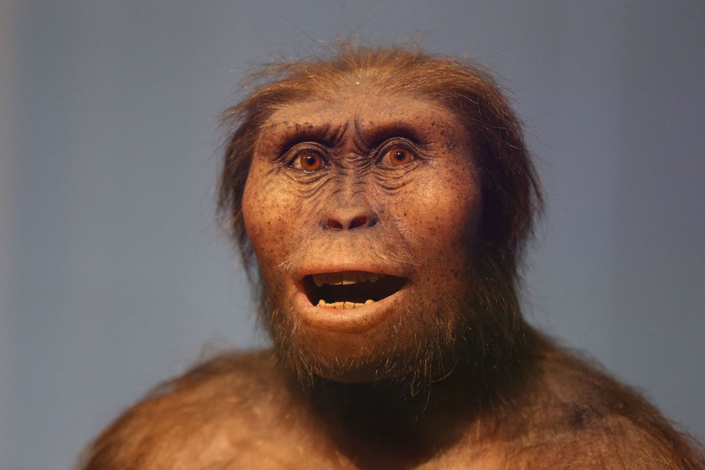 The new exhibit hall features a full-size model of Lucien, a human ancestor who lived 3 million years ago.