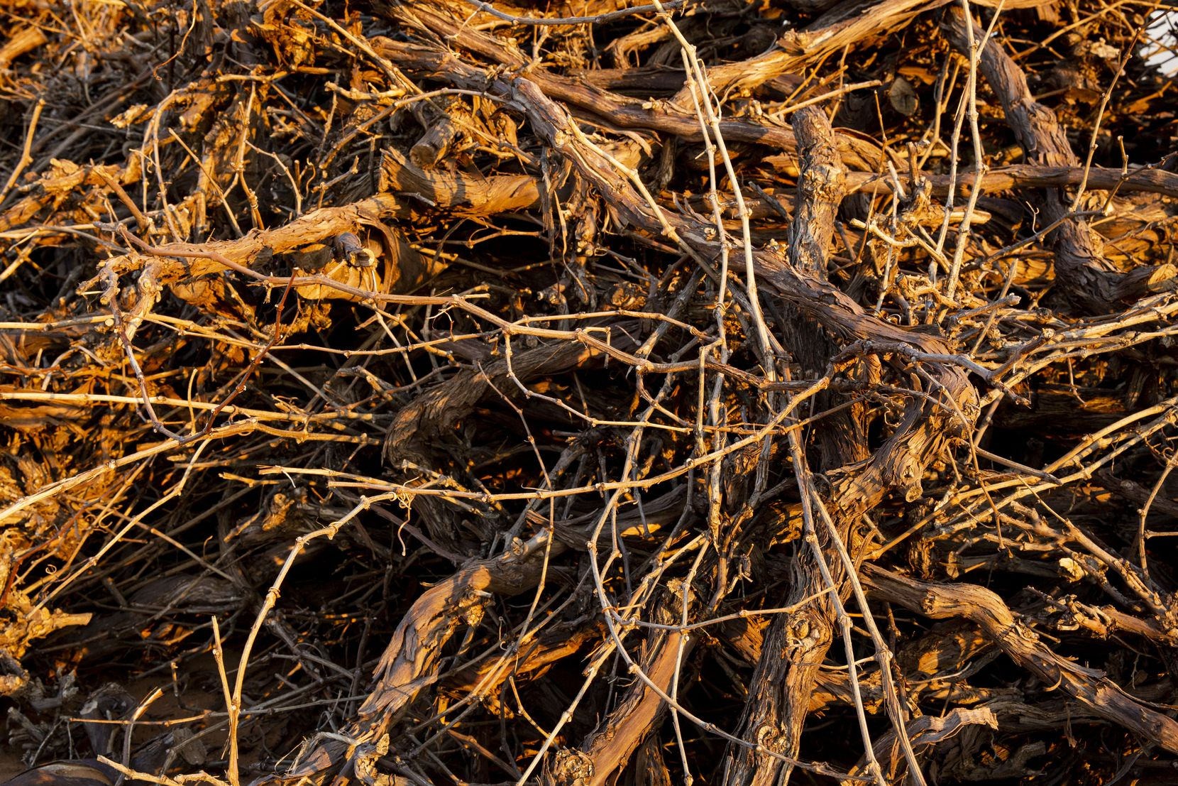 A pile of dead vines at Neal Newsom's vineyard in Plains.