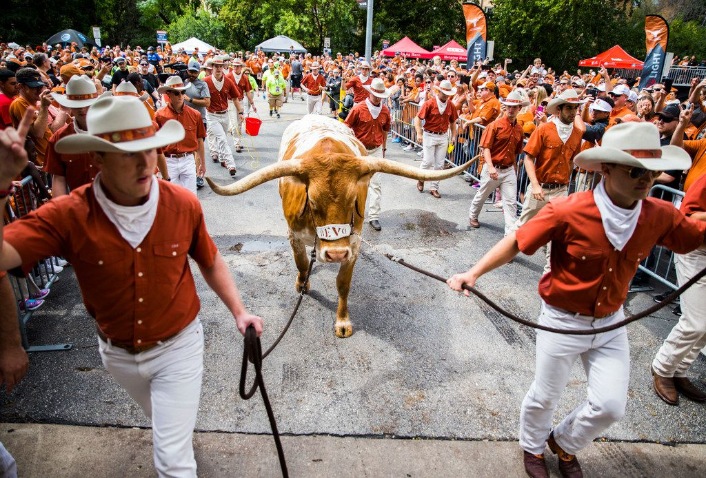 Texas mascot Bevo is escorted in to the stadium before a college football game between TCU and the University of Texas on Saturday, September 22, 2018 at Darrell K Royal - Texas Memorial Stadium in Austin. (Ashley Landis/The Dallas Morning News)