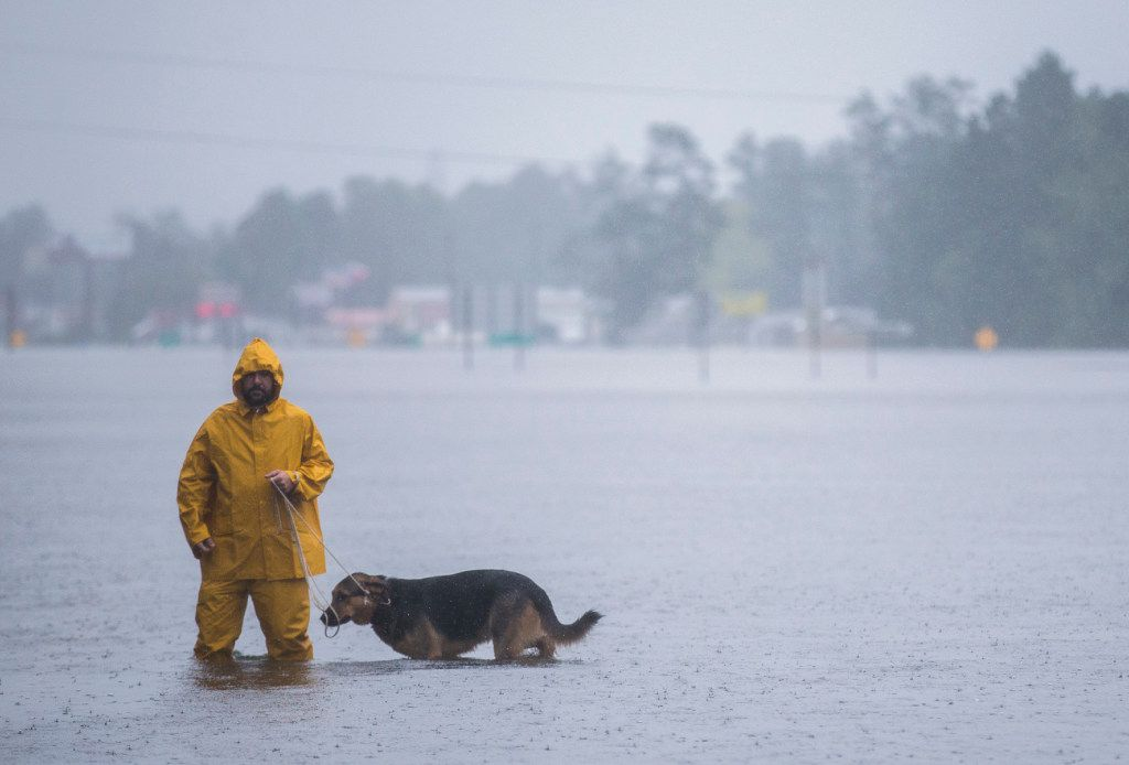 A man and his dog navigate flood waters from Hurricane Harvey on Wednesday, August 30, 2017 in Lumberton, Texas. (Ashley Landis/The Dallas Morning News)