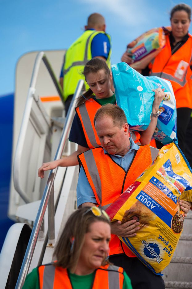 Volunteers assist with a special Southwest Airlines aid flight to transport about 60 dogs and cats from Puerto Rico to the United States where they'll be put up for adoption.