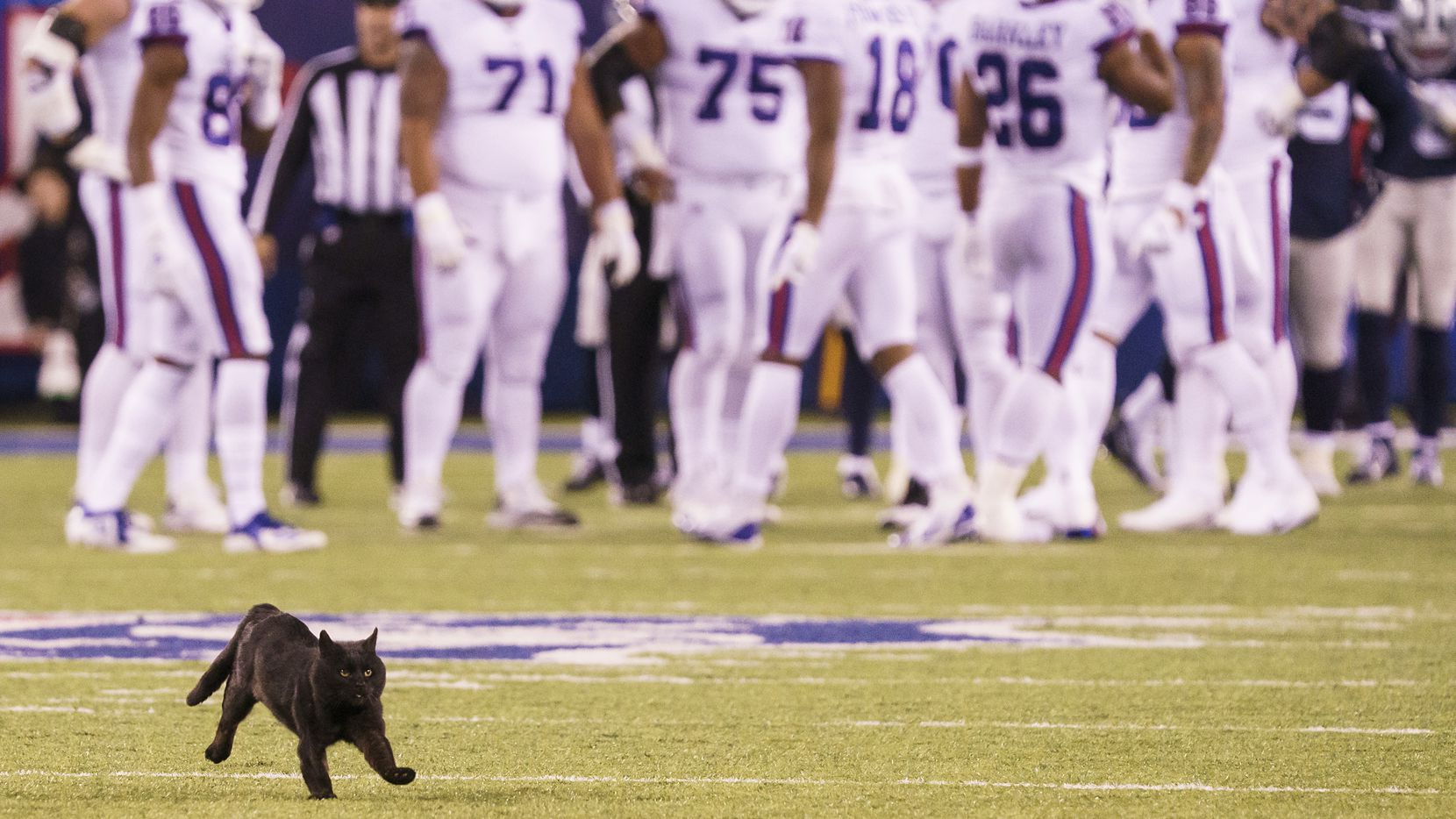 A black cat runs across the field during the second quarter of an NFL football game between the Dallas Cowboys and the New York Giants, Monday, Nov. 4, 2019, in East Rutherford, N.J.