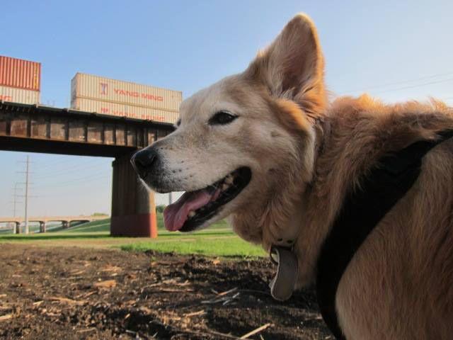 B.K. on the Trinity Trail (2014 File Photo/Tatia Woldt)