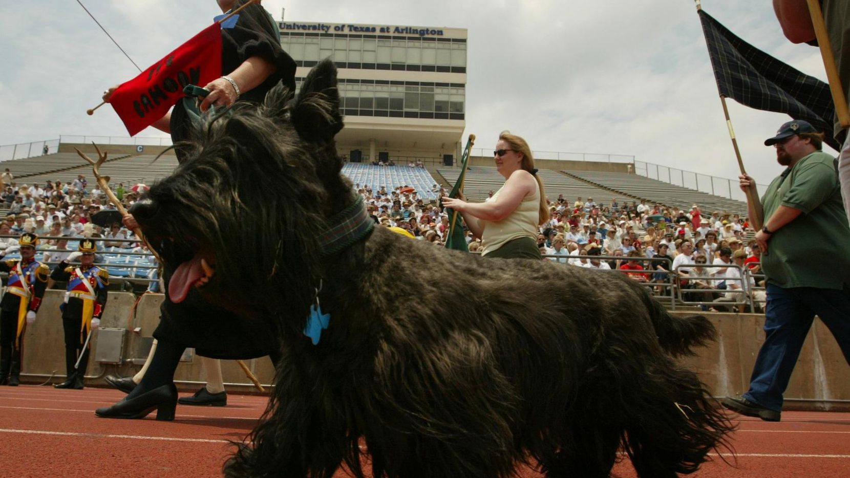 A Scottish terrier and owner enter during the parade of clans at the Texas Scottish Festival and Highland Games at Maverick Stadium on the campus of the University of Texas at Arlington.