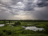 As storm clouds pass by, beams of sunlight reflect off standing water at the Village Creek Drying Beds on July 1, 2017, in Arlington, Texas. The closed waste water treatment facility has since been overtaken by foliage and wildlife, and is a popular bird spotting location. (Ryan Michalesko/The Dallas Morning News)
