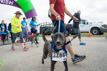 This year's Run for Rover is Saturday morning, starting at McInnish Dog Park. (City of Carrollton)