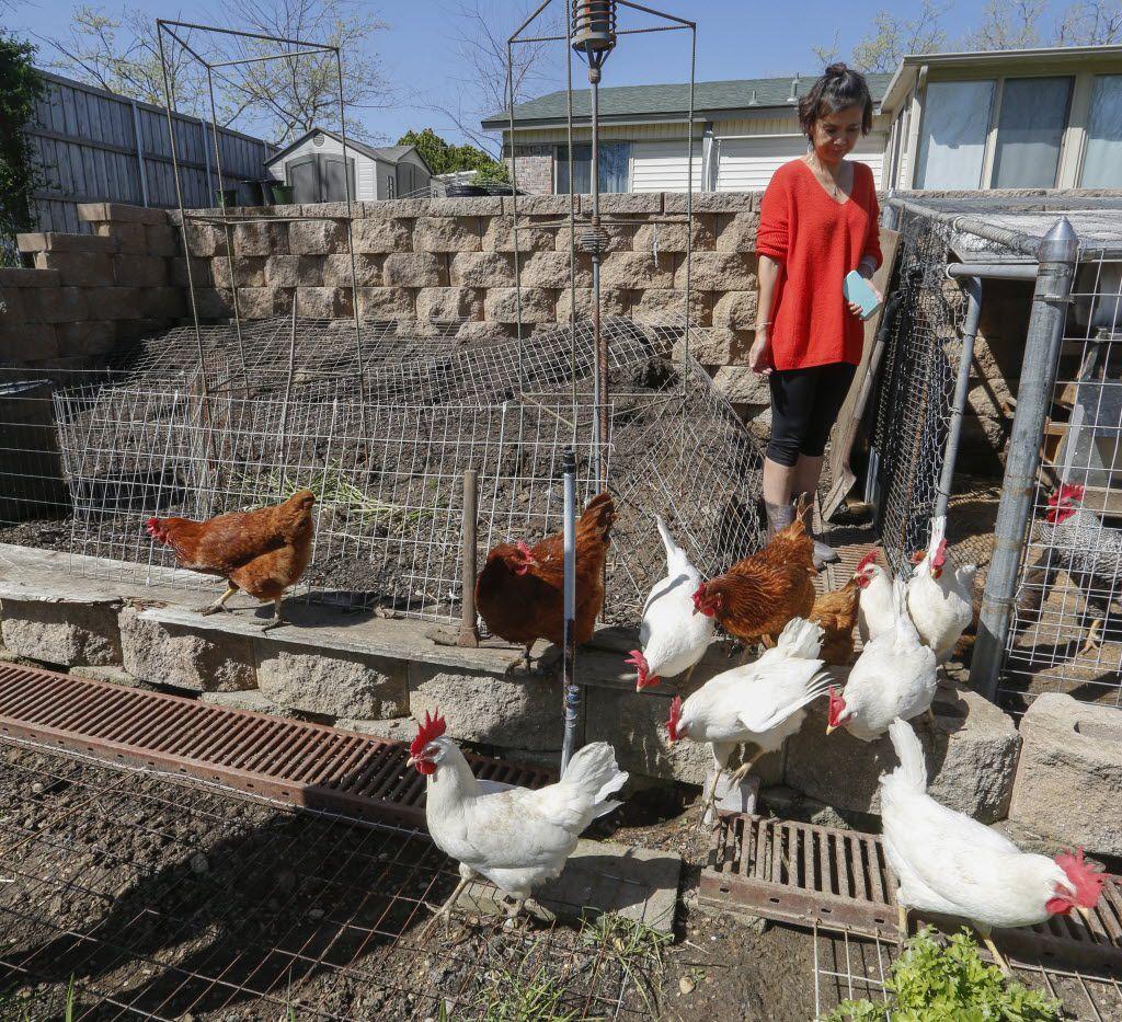Helen Ming, residente de Irving, deja a sus gallinas salir de su gallinero. Irving aprobó una ordenanza permitiendo la posesión gallinas en abril de 2017.