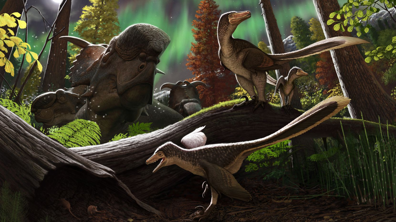 Artistic rendering of a juvenile dromaeosaur 70 million years ago on the Prince Creek Formation in northern Alaska.