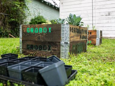 GroBox gardens from Restorative Farms come with Dallas-grown seedlings.