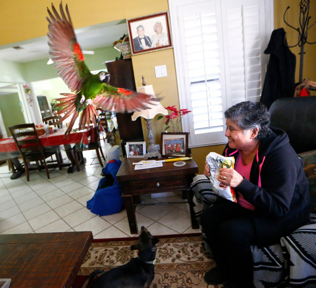 """Maria Scott calls her bird, Paraqueto, to come eat chips, as her dog """"Roy"""" looks up,  after she returned to her house after her gas was shut off and the neighborhood is being refitted for pipes after a house exploded do to antiquated pipes in Dallas on March 12, 2018. (Nathan Hunsinger/The Dallas Morning News)"""