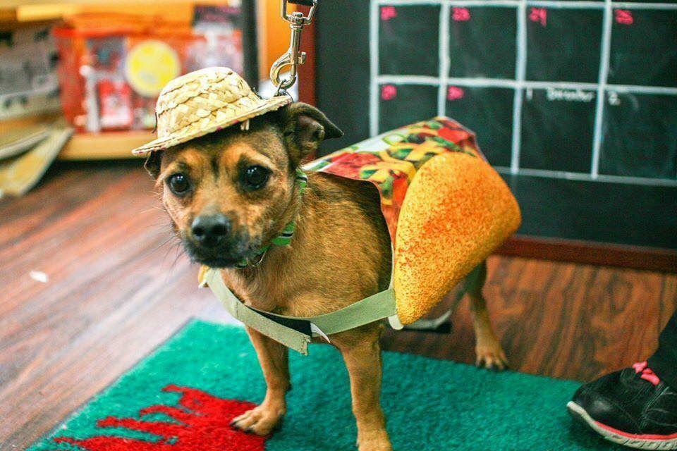 Dog Dayz of Dallas is Saturday at Flag Pole Hill.