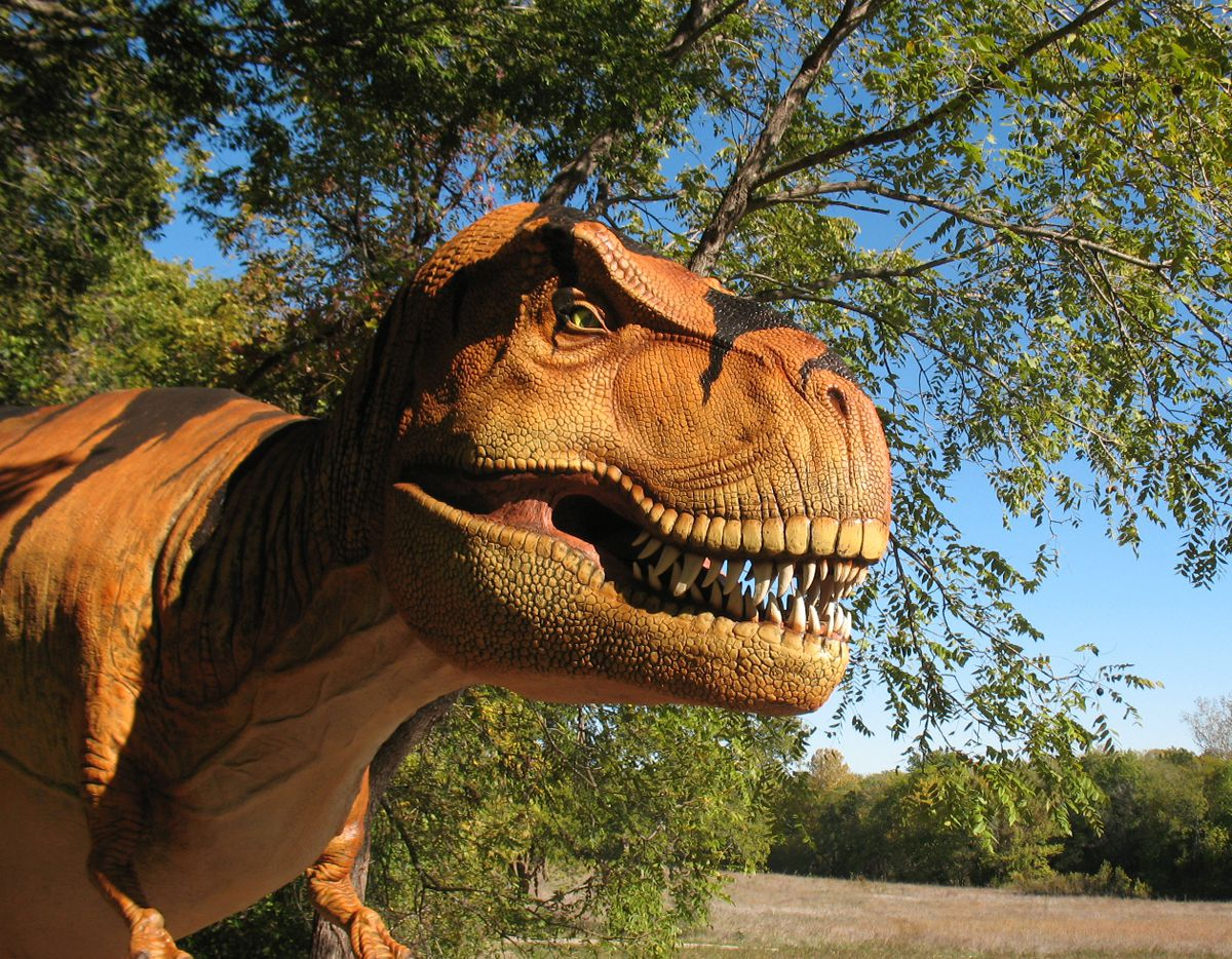 See model dinosaurs up close and personal at the Heard Natural Science Museum and Wildlife Sanctuary's new exhibit Dinosaurs Live!