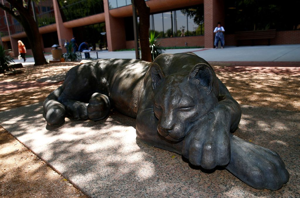 A statue of Sleeping Panther upholds tradition on the lawn of the Tarrant County Administration building, at the corner of Weatherford and Main streets in downtown Fort Worth.