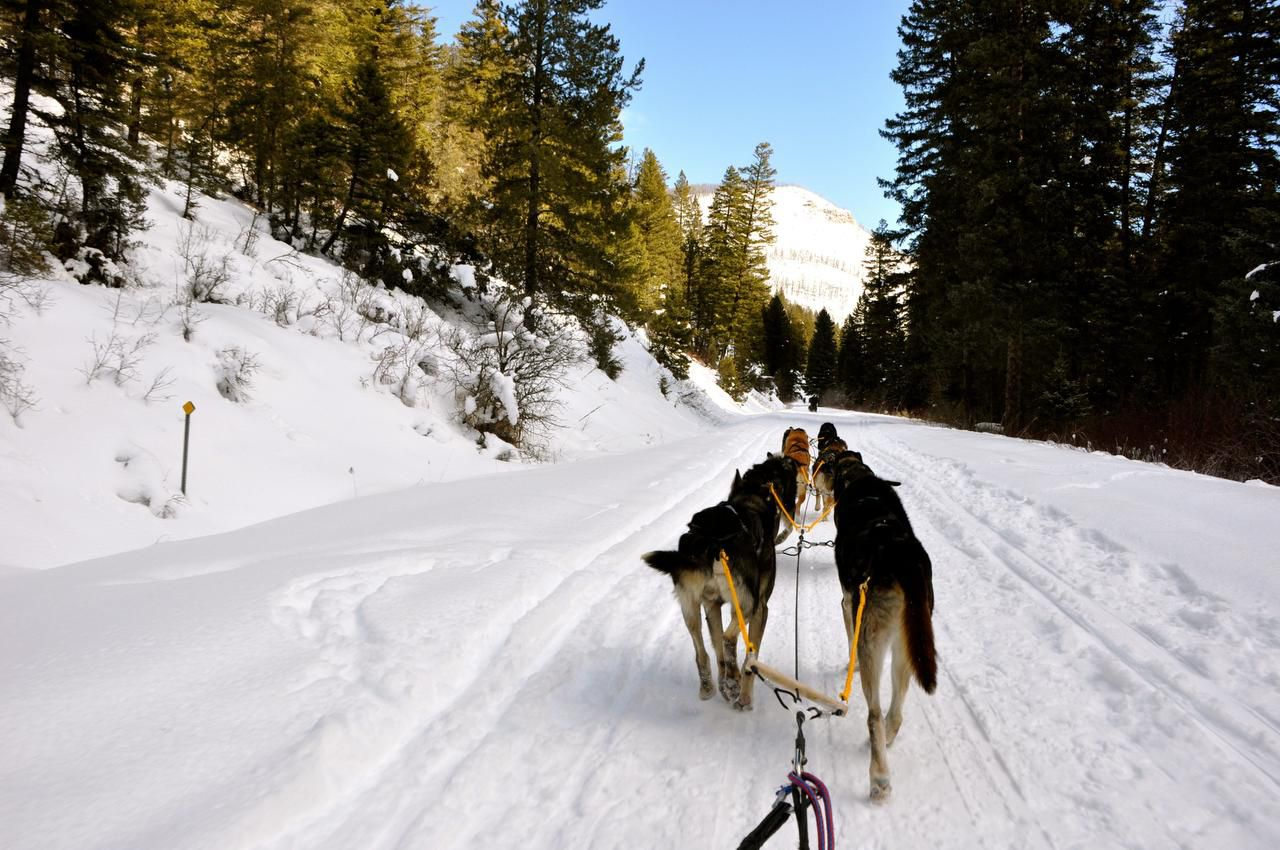 "Order your dogs forward with a hearty ""Hike!"" at Absaroka Dog Sled Treks in Montana."