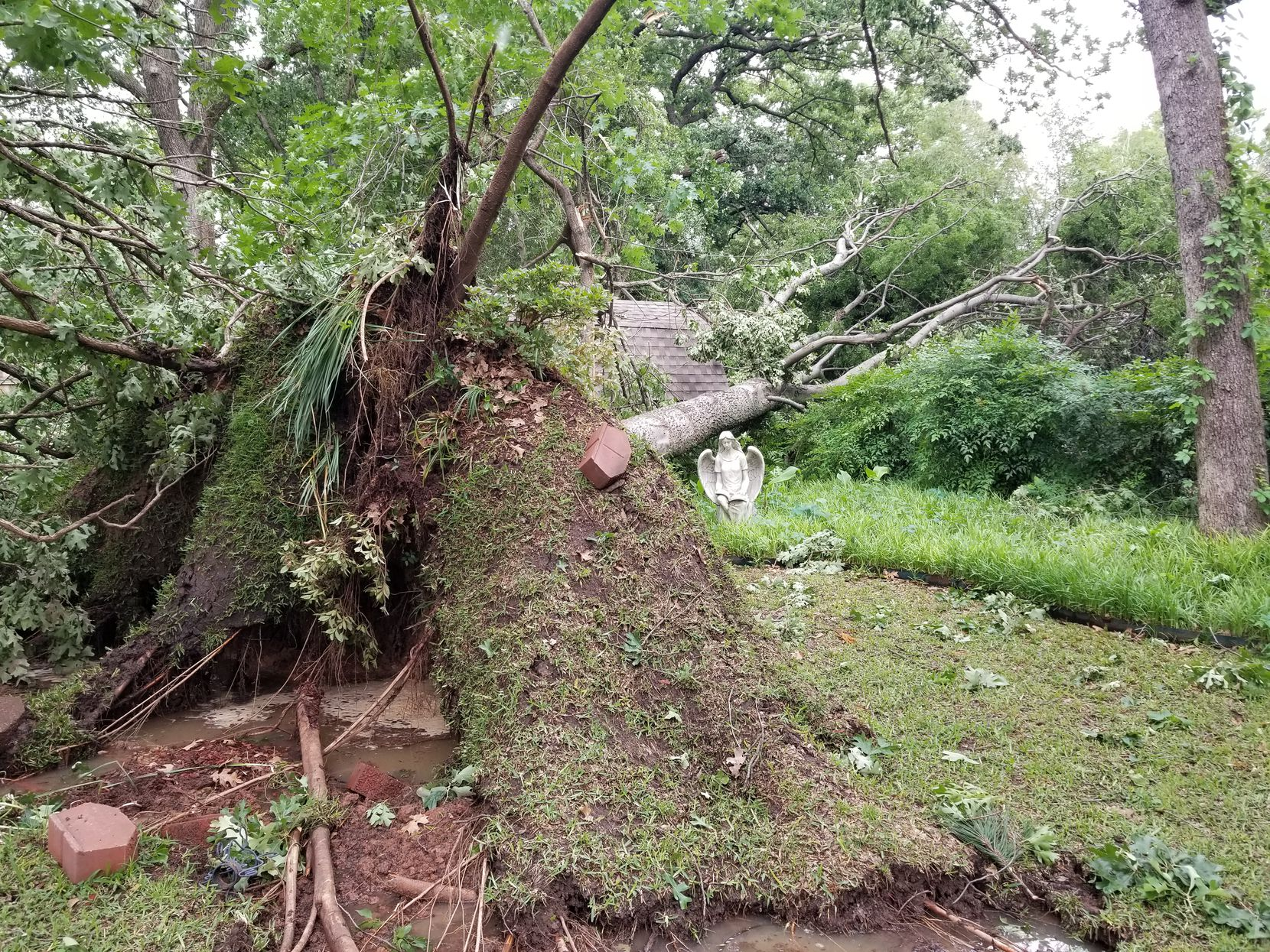 Jane Welborn said seven trees fell on her property during a tornado in Denton Tuesday evening, including one that was ripped out along with a large network of roots.