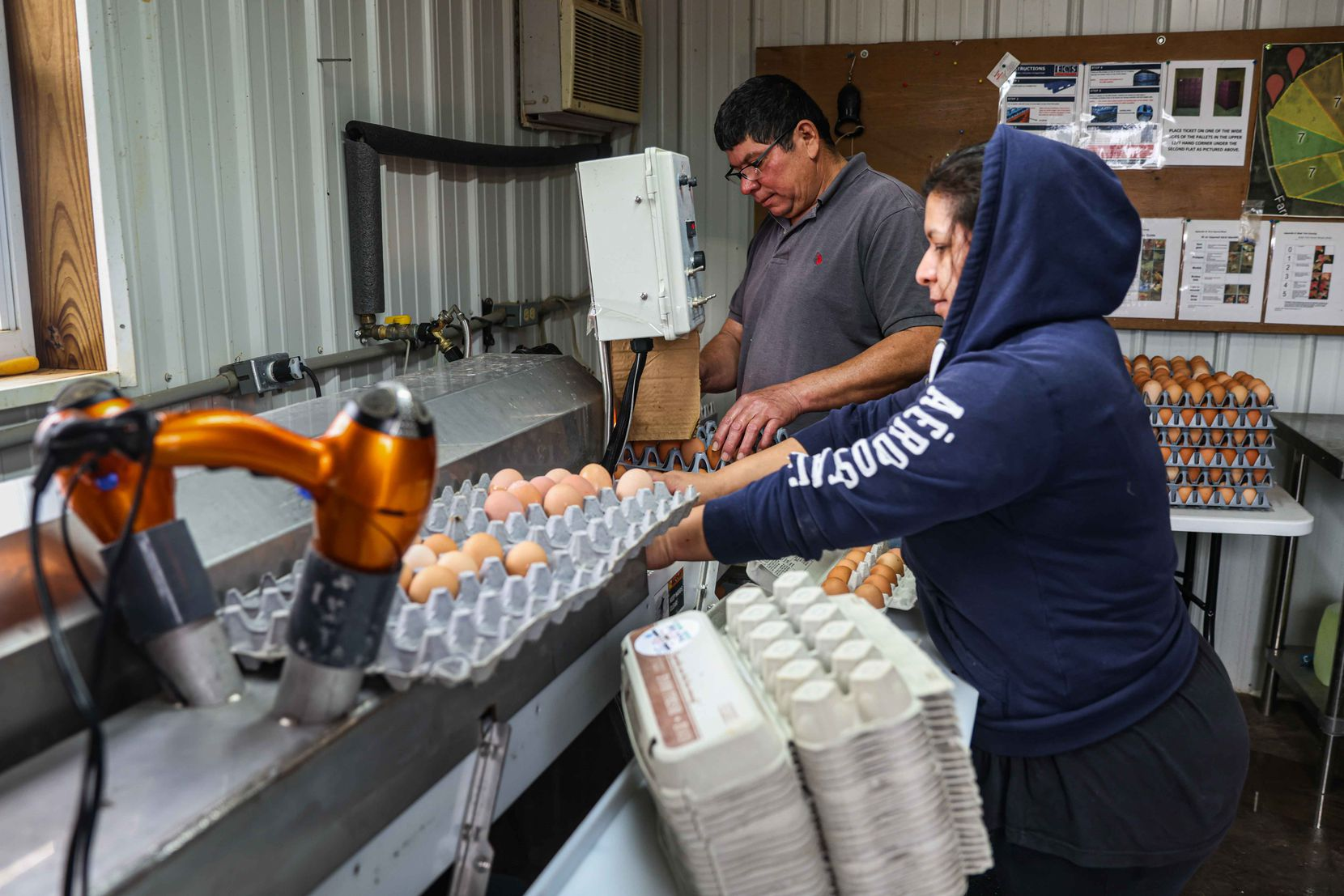 From left, Elmer Diaz and Roxana Lopez work on washing the collected eggs for packaging and distribution at Cedar Ridge Free Range in Pickton, Texas on Saturday, February 27, 2021. (Lola Gomez/The Dallas Morning News)