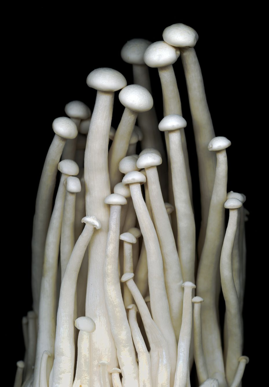"Carolyn Brown is still producing beautiful photos amid the quarantine, including ""Enokitake Mushrooms."""