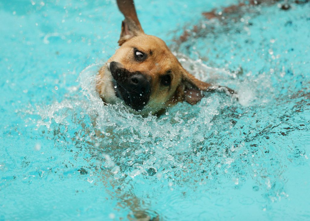 A dog swims in the pool.