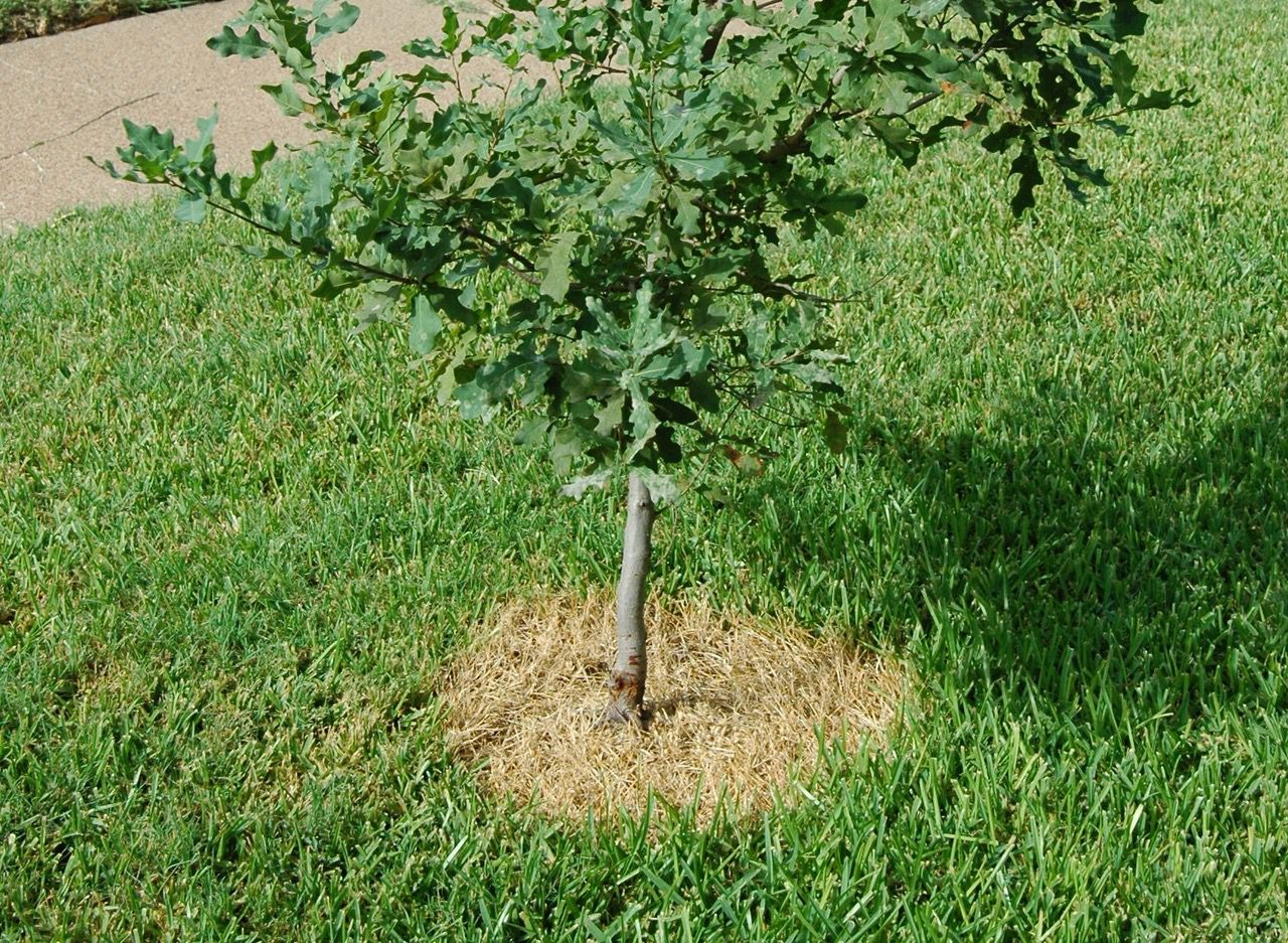 Organic herbicides can effectively kill weeds around shrubs and trees without hurting the trunks of the plants.