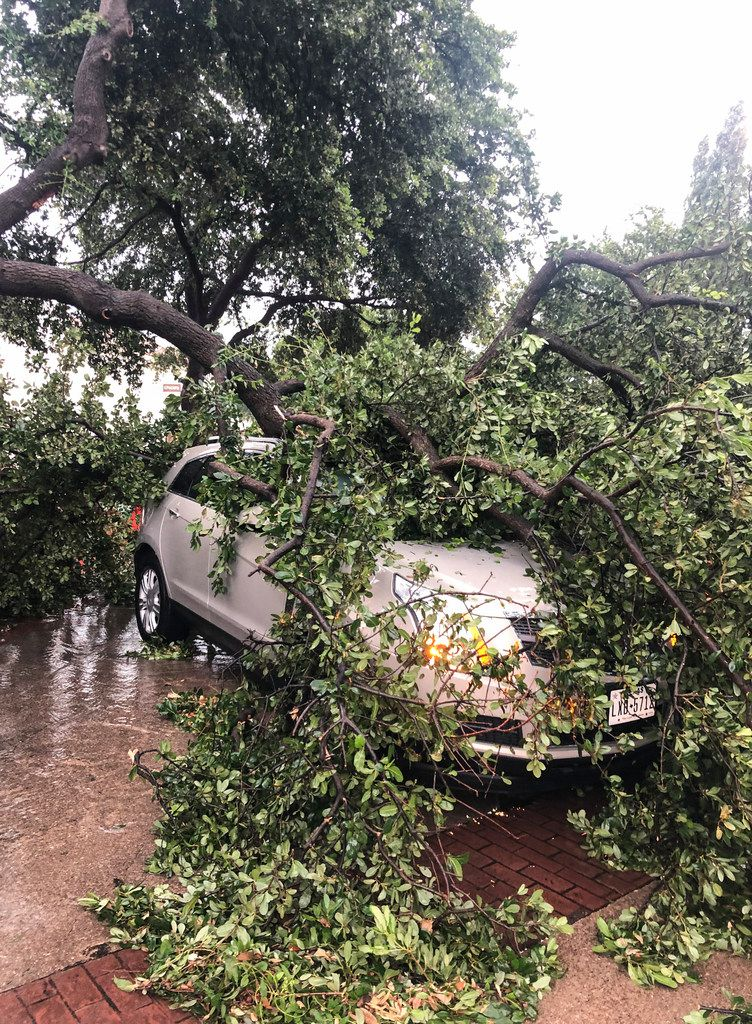 A downed tree branch sits on a car Sunday, June 9, 2019, outside Lowkey Poke Joint, where owner Sam Handa and chef Jose Araujo lifted a tree off a car after it had fallen on during Sunday's storms so a woman could escape. (Photo by Sam Handa)