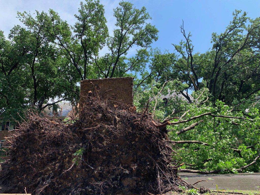 Fallen trees in the  4300 block of Versailles in Highland Park, Texas on Sunday, June 9, 2019. (Keith Campbell/The Dallas Morning News)