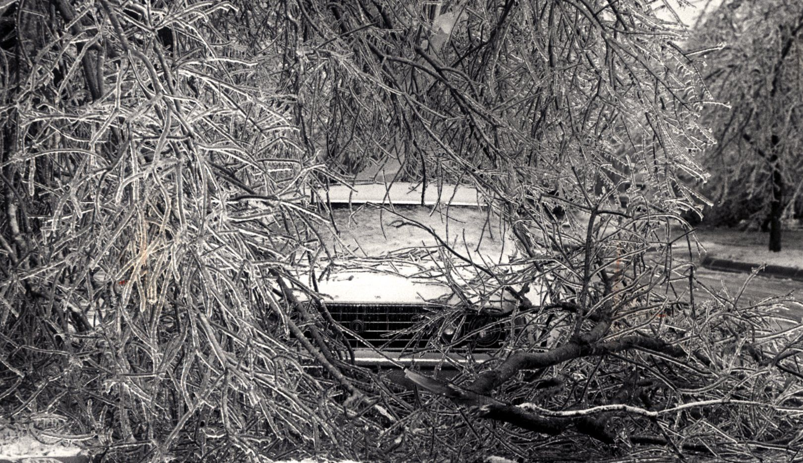 December 31, 1978. Icy tree branches on car at 7060.