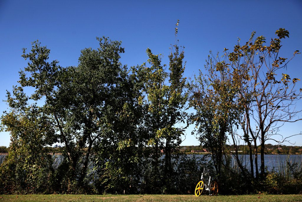 A VBike rental waits in the grass by White Rock Lake in in Dallas on Oct. 23, 2017.