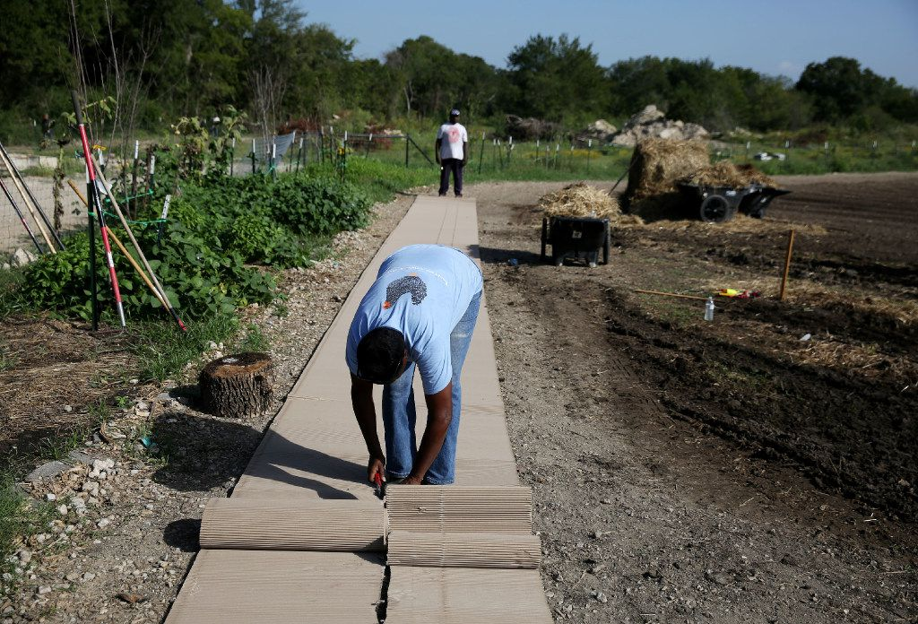 Farm manager Kim high rolls out ground cover as she prepares rows at Bonton Farms off Ravenview Road in Dallas. The farm is preparing for their first fall crop on the land. (Andy Jacobsohn/The Dallas Morning News)