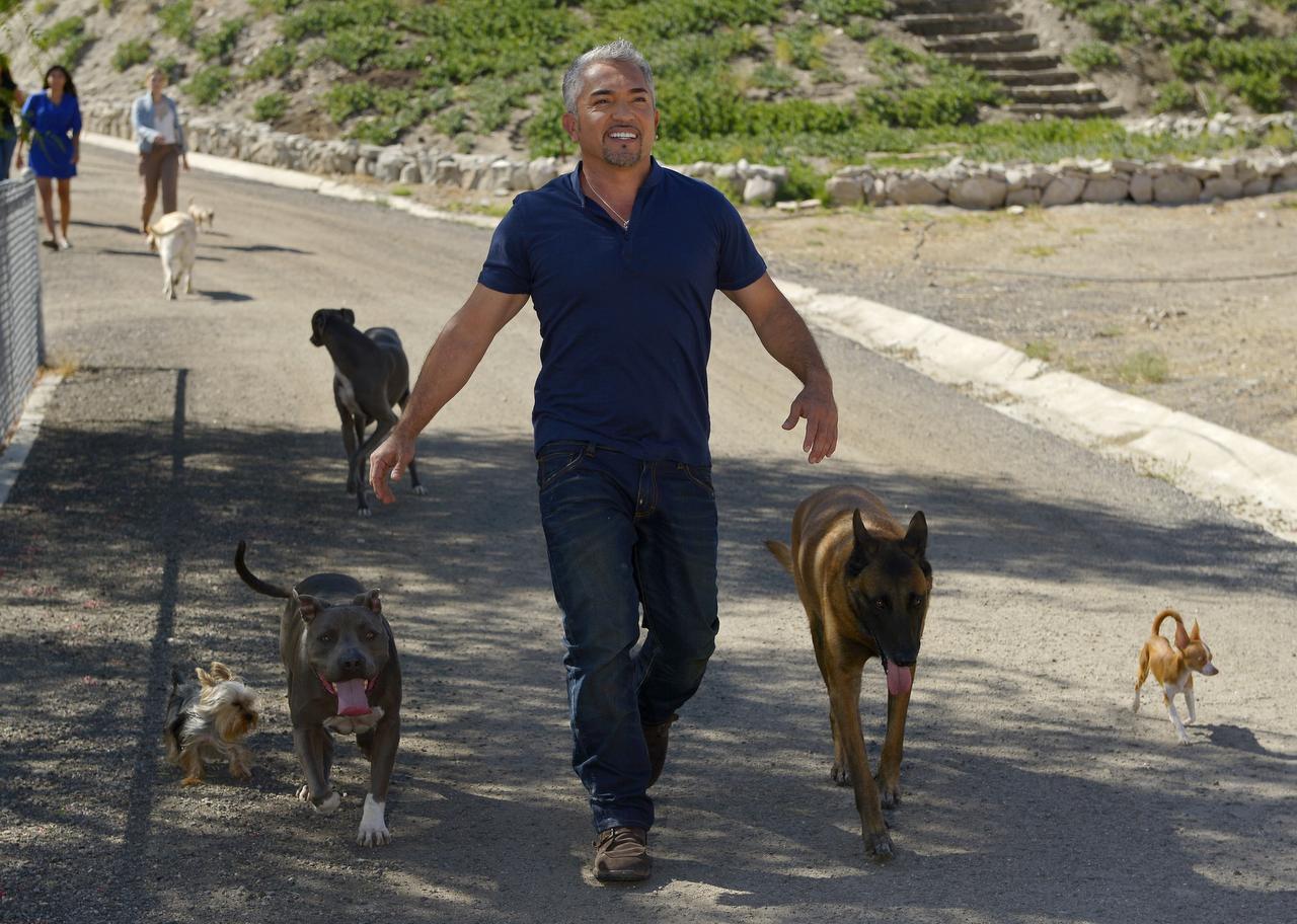"""Una investigación independiente libró de cargos al """"Encantador de perros"""", César Millán, por un incidente en el que un perro mordió a un cerdo. La pesquisa concluyó que fue un accidente sin mayores consecuencias. (AP/ARCHIVO)"""