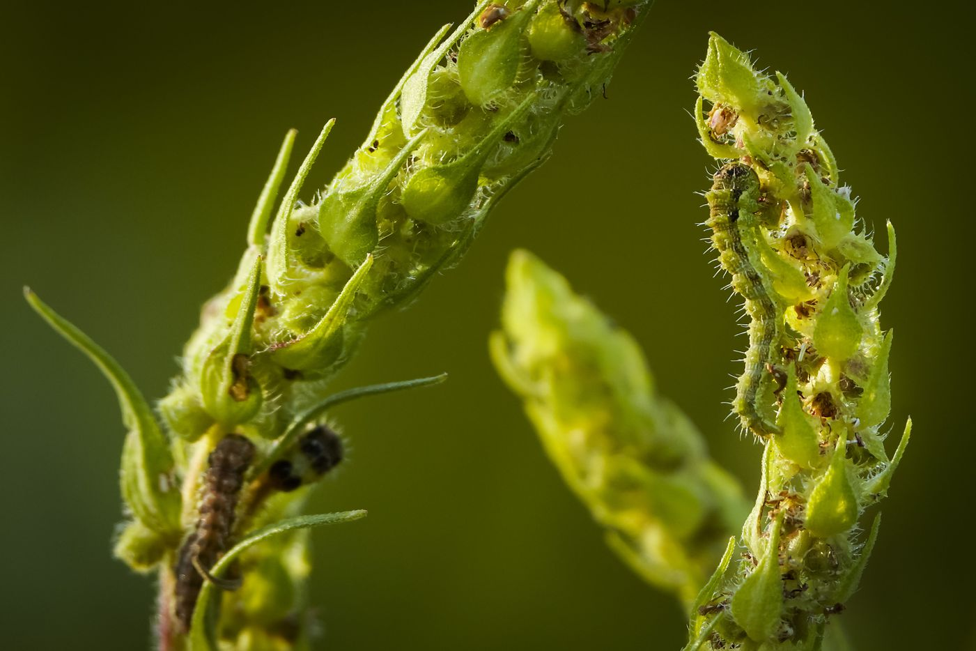 Caterpillars are seen along the Primitive Pond Trail at Trinity River Audubon Center on Wednesday.