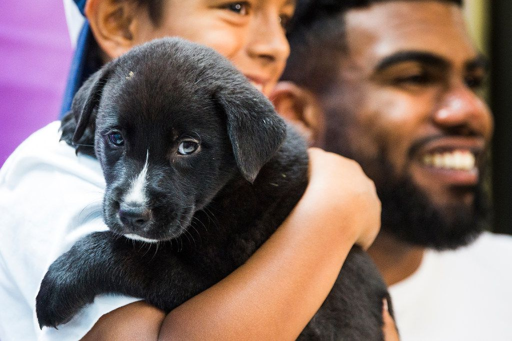 Dallas Cowboys running back Ezekiel Elliott adopted a dog named Ivan from the SPCA of Texas. Uber will deliver puppies from the SPCA of Texas for puppy play dates on Valentine's Day in Dallas.