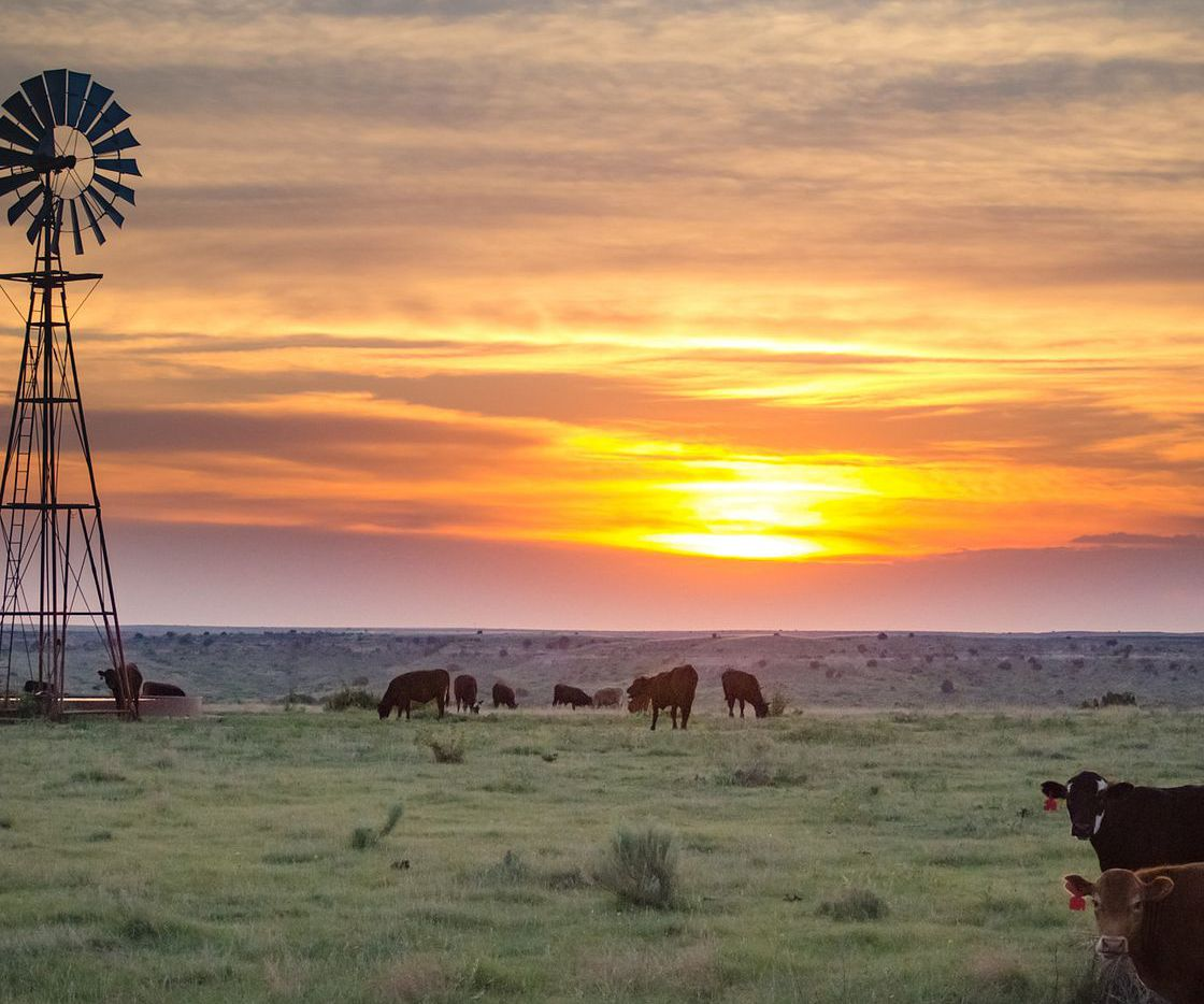 The typical rural Texas land purchase in the most recent quarter was 1,176 acres.