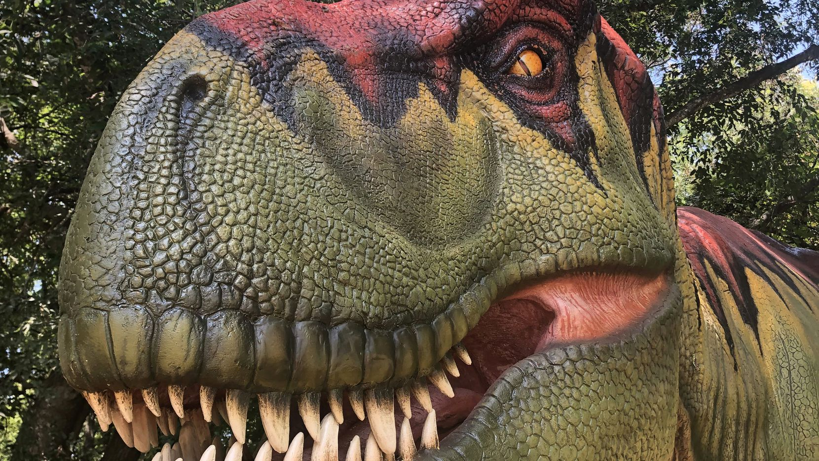 Dinosaurs Live! is now on view at the Heard Museum in McKinney.