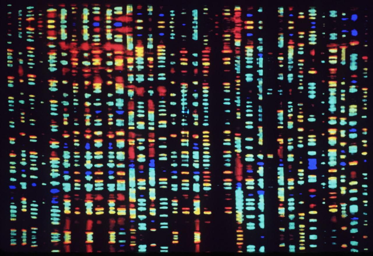 This undated computer rendering of a fragment of the human genome is part of a new exhibit at the American Museum of Natural History.